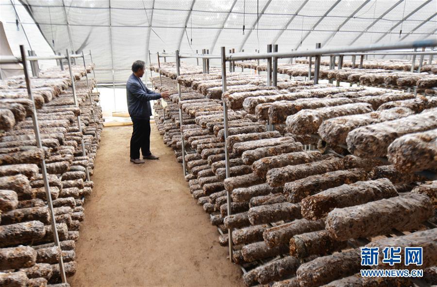 #(脱贫攻坚)(2)甘肃永靖:食用菌产业助力脱贫