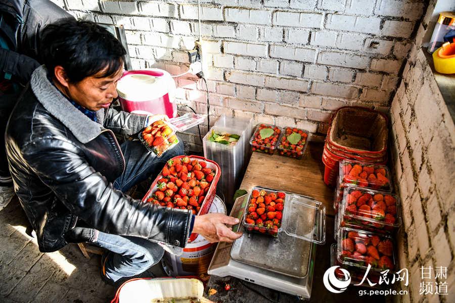 一位种植户将刚采摘的新鲜草莓装盒准备出售。(侯崇慧摄)
