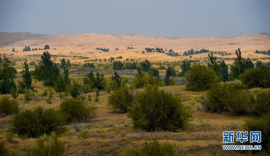 (环境)(2)库布其沙漠披绿装
