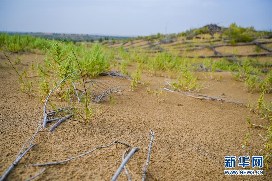 (环境)(5)库布其沙漠披绿装